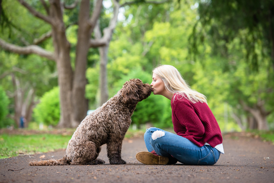 Henry the Labradoodle