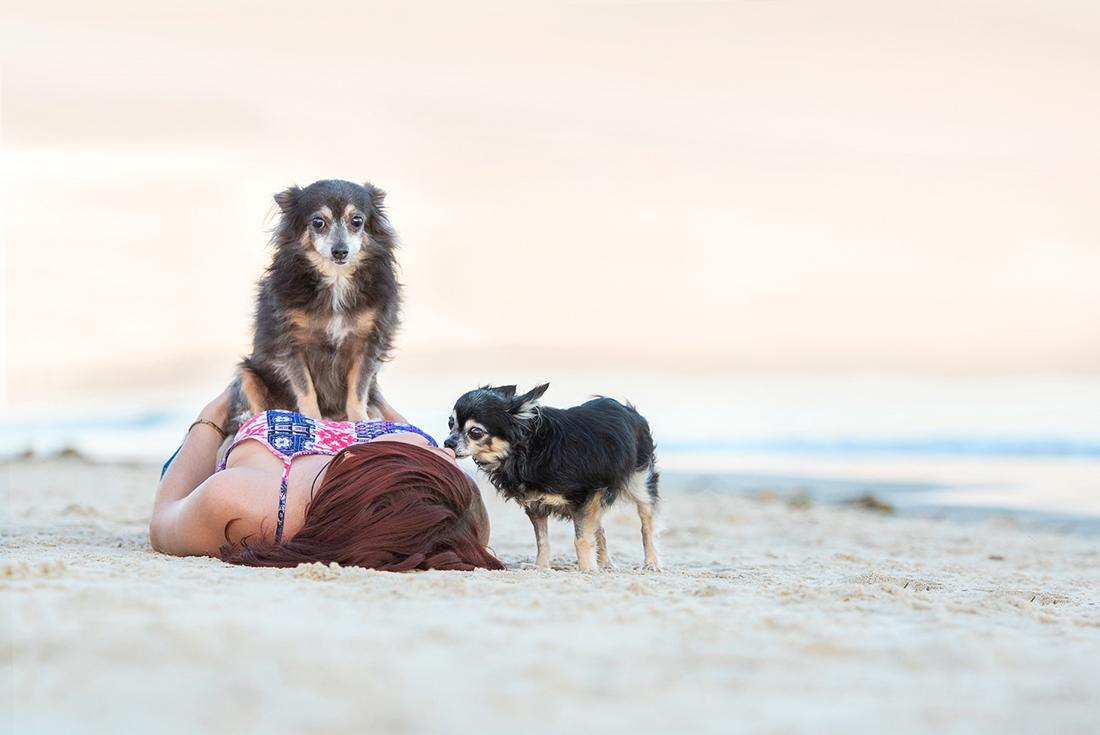 Chihuahua photo shoot at Red Beach