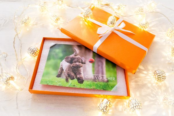pet photography Christmas Gift Vouchers