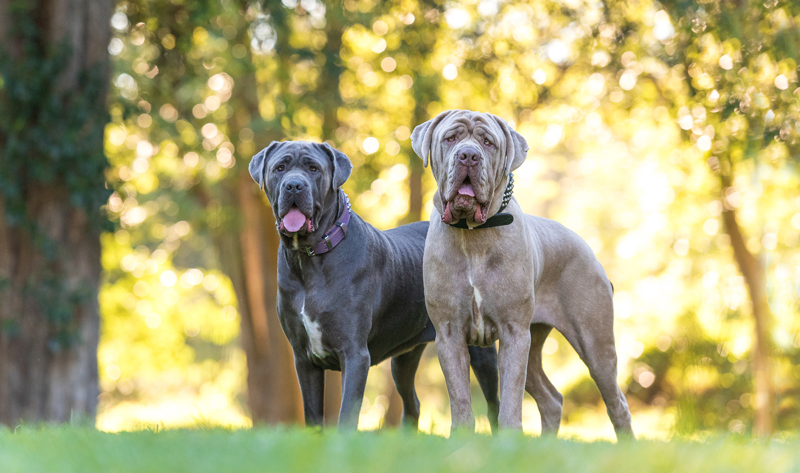 Bear & Kuda: Funny Face Dogs Book Session