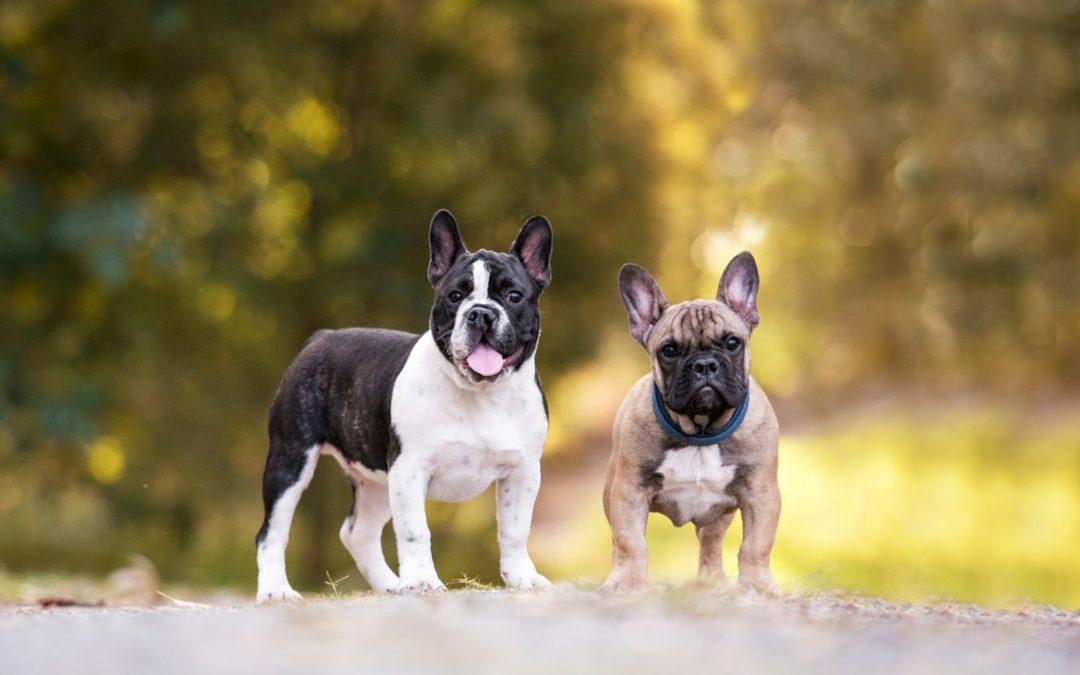 Cleft Puppy Love